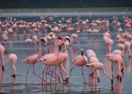 Nairobi/Lake Nakuru/Masai Mara